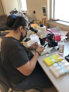 Biology student Sammy Huerta 225x300 - TSTC Biology students flourish in Texas A&M Citrus Center experiences